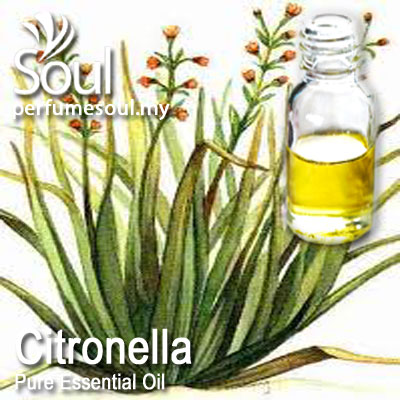 Pure Essential Oil Citronella (Java Citronella) - 50ml