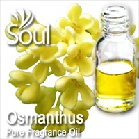 Fragrance Osmanthus - 10ml