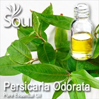 Pure Essential Oil Persicaria Odorata - 50ml